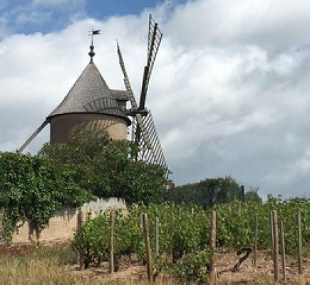 Beaujolais: the finest AOC wines – Half day tour